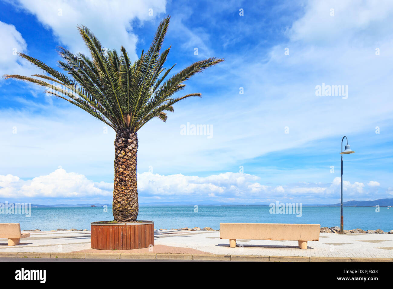 Palm tree, bench and lamp on the sea in Porto Santo Stefano travel destination. Argentario, Tuscany, Italy. - Stock Image
