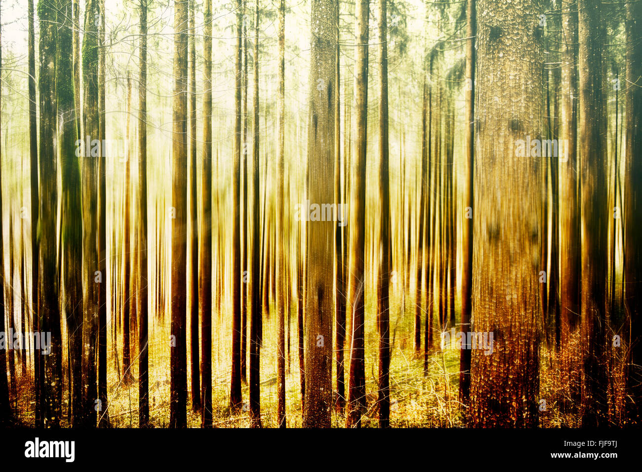 Abstract forest in motion blur, abstract colorful background - Stock Image