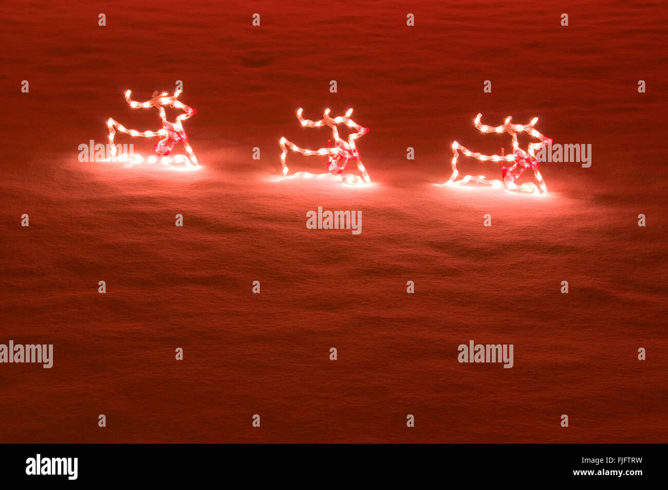 Reindeer Display Stock Photos & Reindeer Display Stock Images - Alamy
