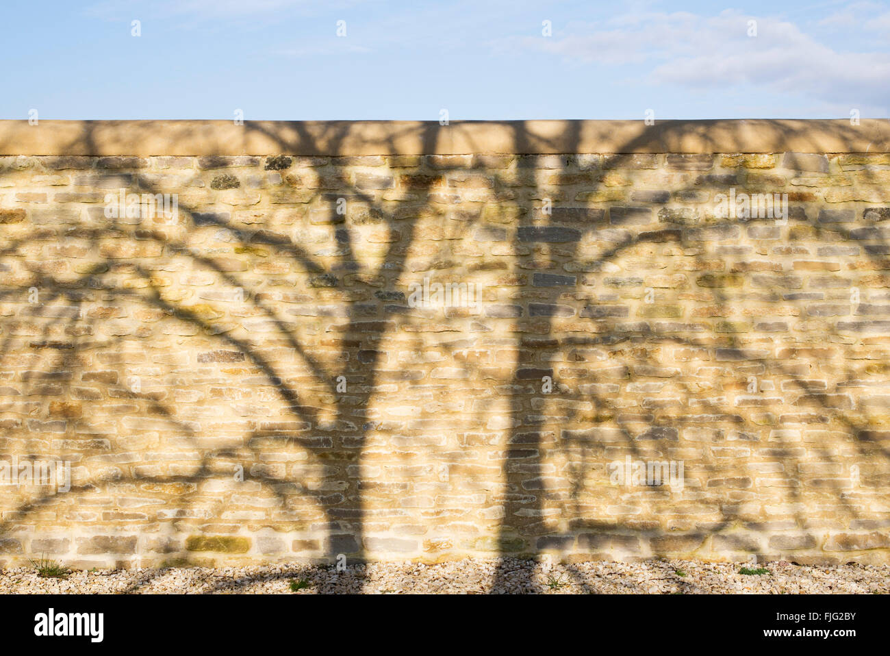 Tree shadow pattern on a stone garden wall - Stock Image