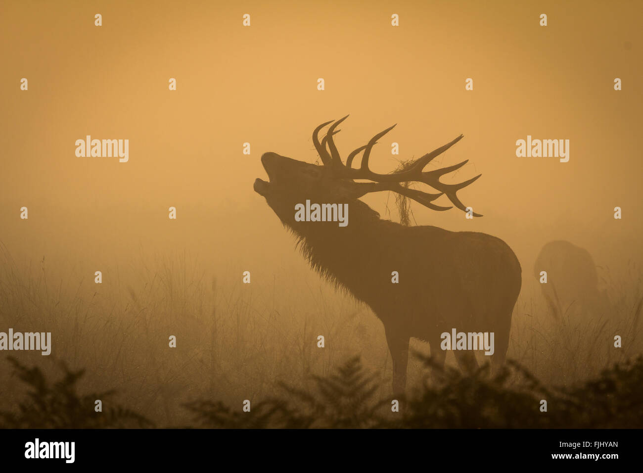 Bellow in the mist - Stock Image