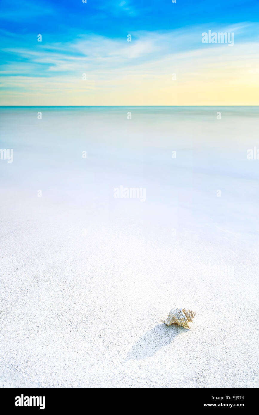 Ocean seascape. Sea mollusk shell in a white sandy beach under blue sky - Stock Image