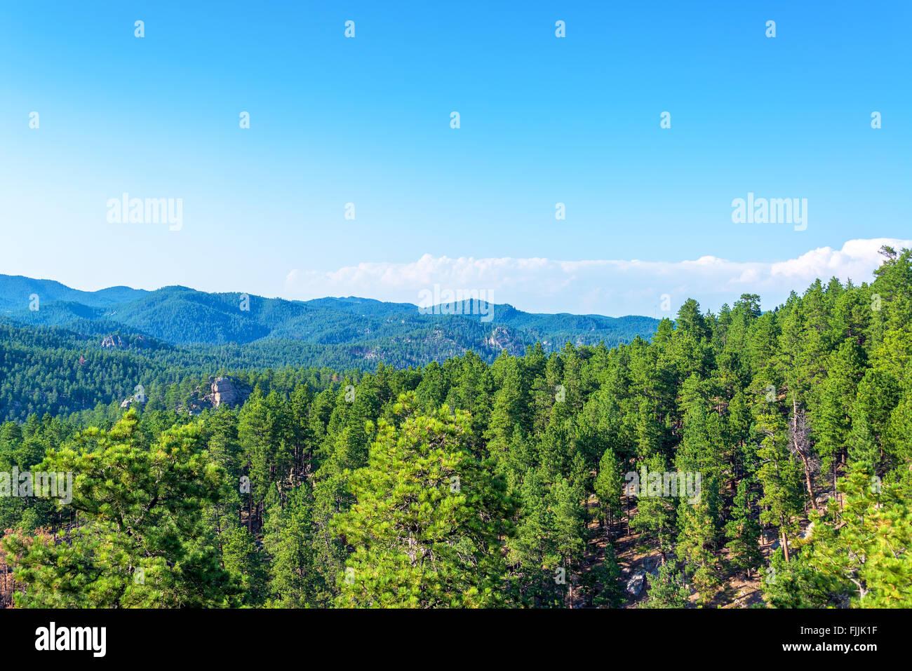 Black Hills National Forest in South Dakota - Stock Image