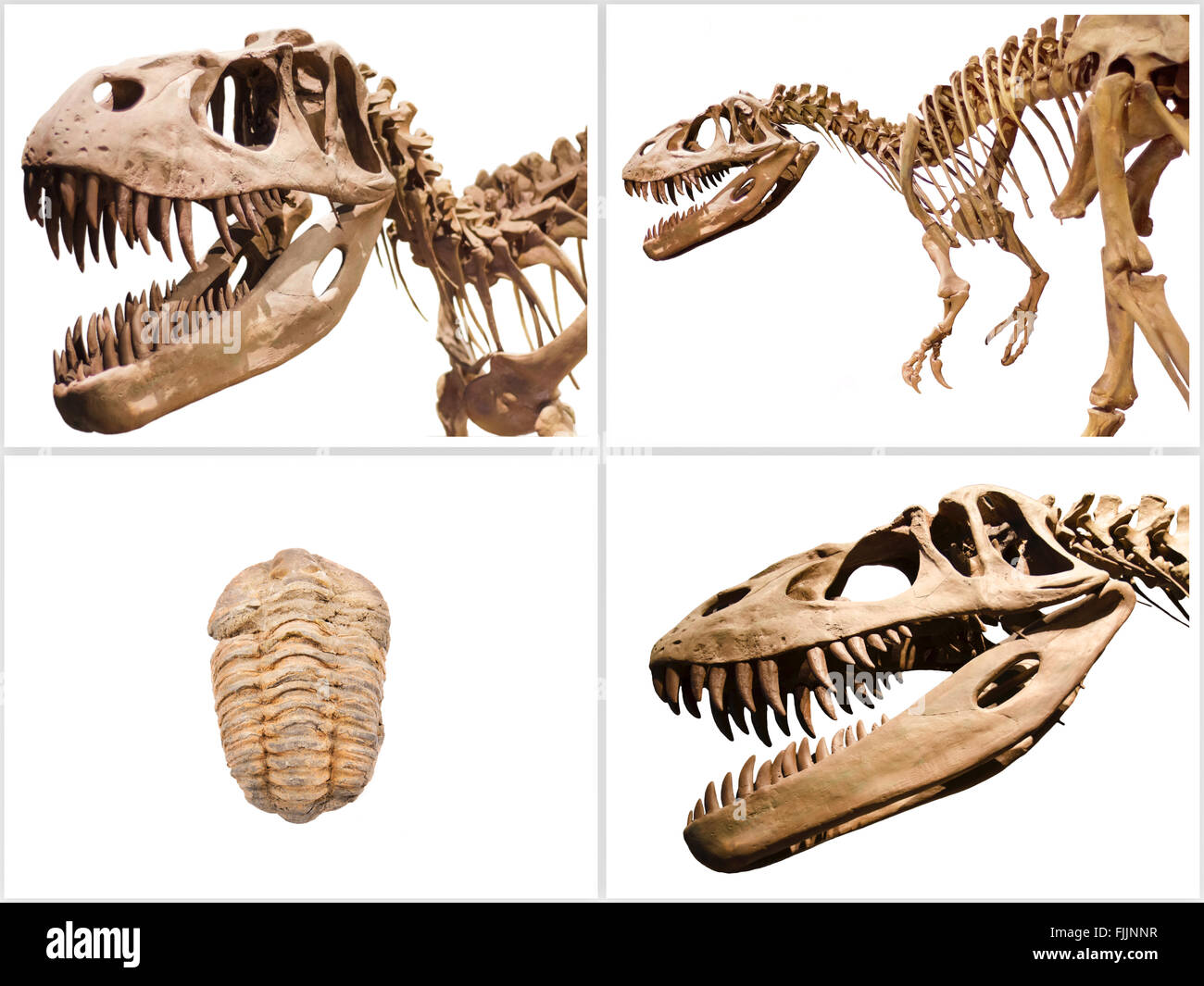 Set of dinosaurs skeleton and trilobites fossil, on white isolated background. - Stock Image