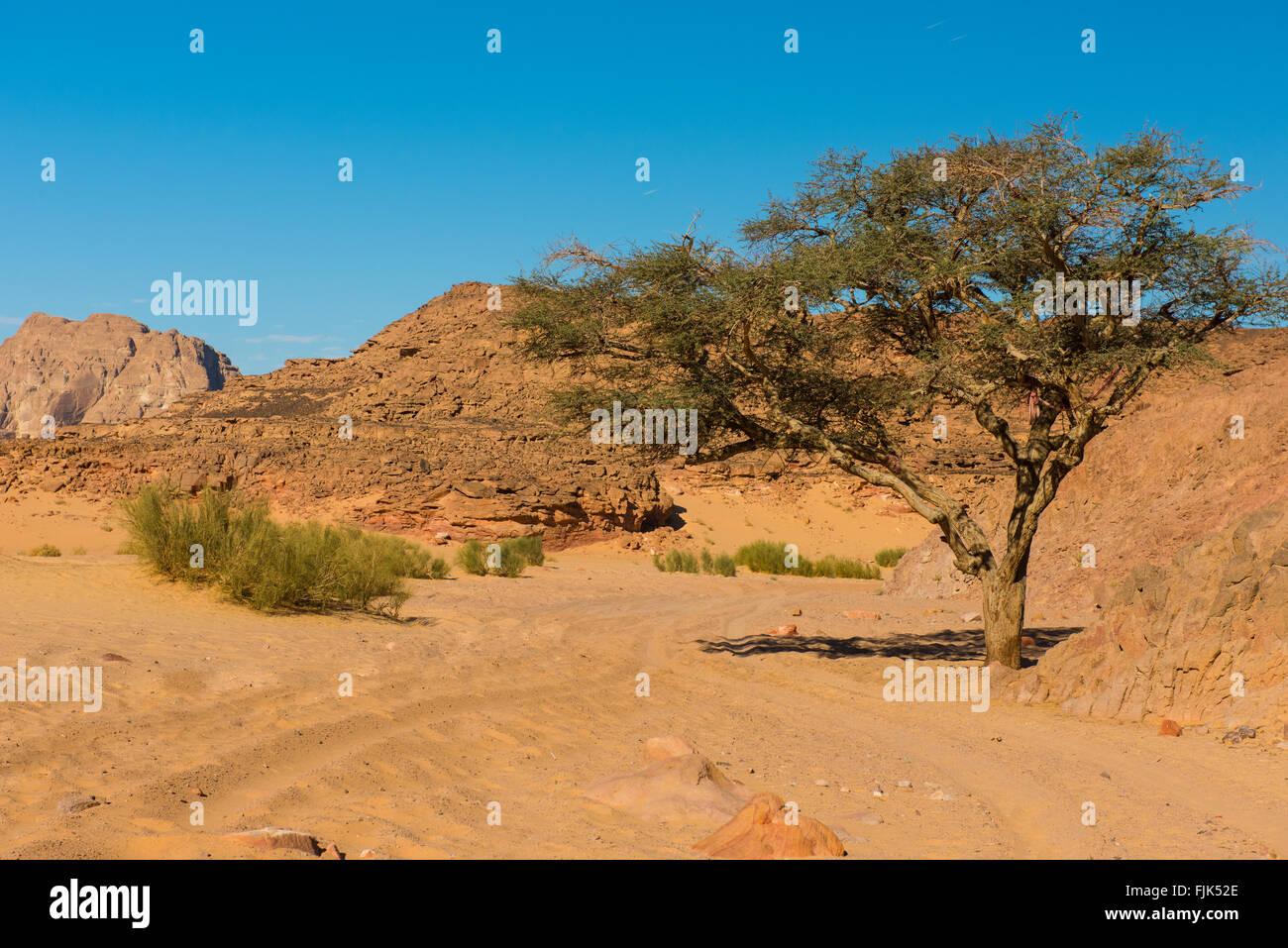 Egypt Sinai desert view  Rocky hills Blue sky - Stock Image