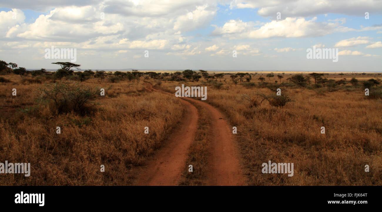 A dirt road path cuts through the Serengeti, Tanzania - Stock Image