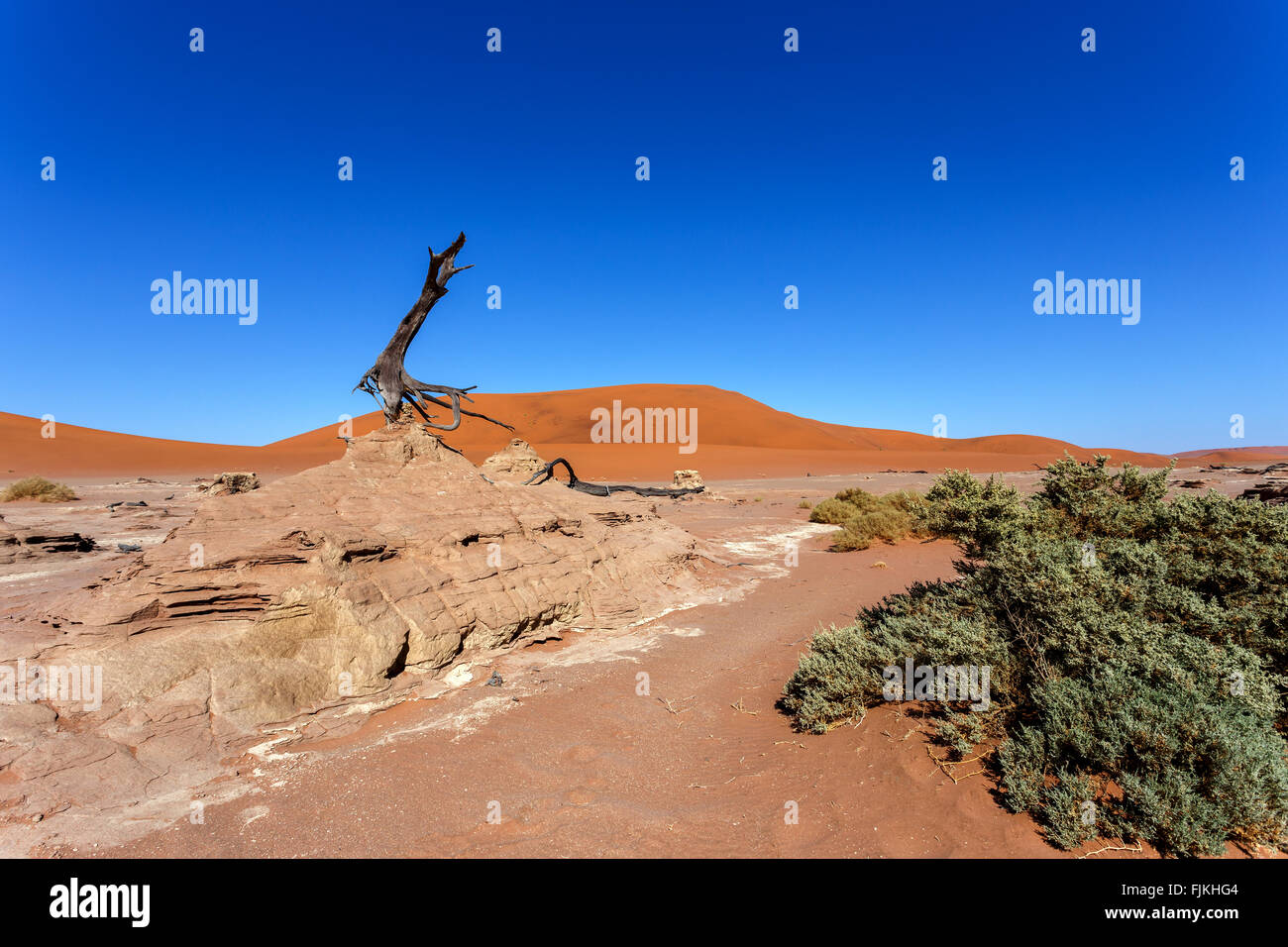 beautiful sunrise landscape of hidden Dead Vlei in Namib desert with blue sky, this is best place of Namibia - Stock Image