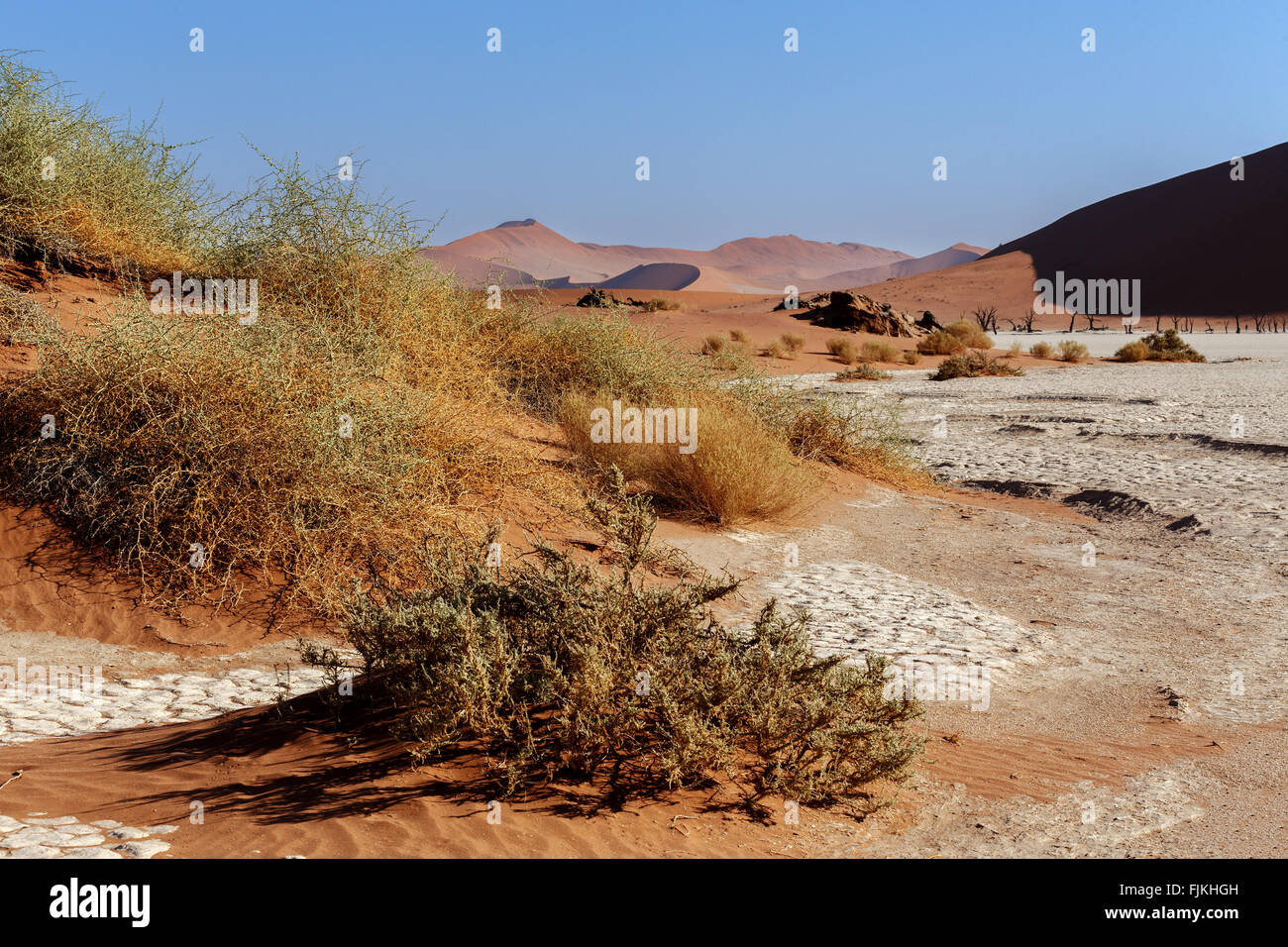 green small tree in hidden Dead Vlei in Namib desert with blue sky, this is best place of Namibia - Stock Image