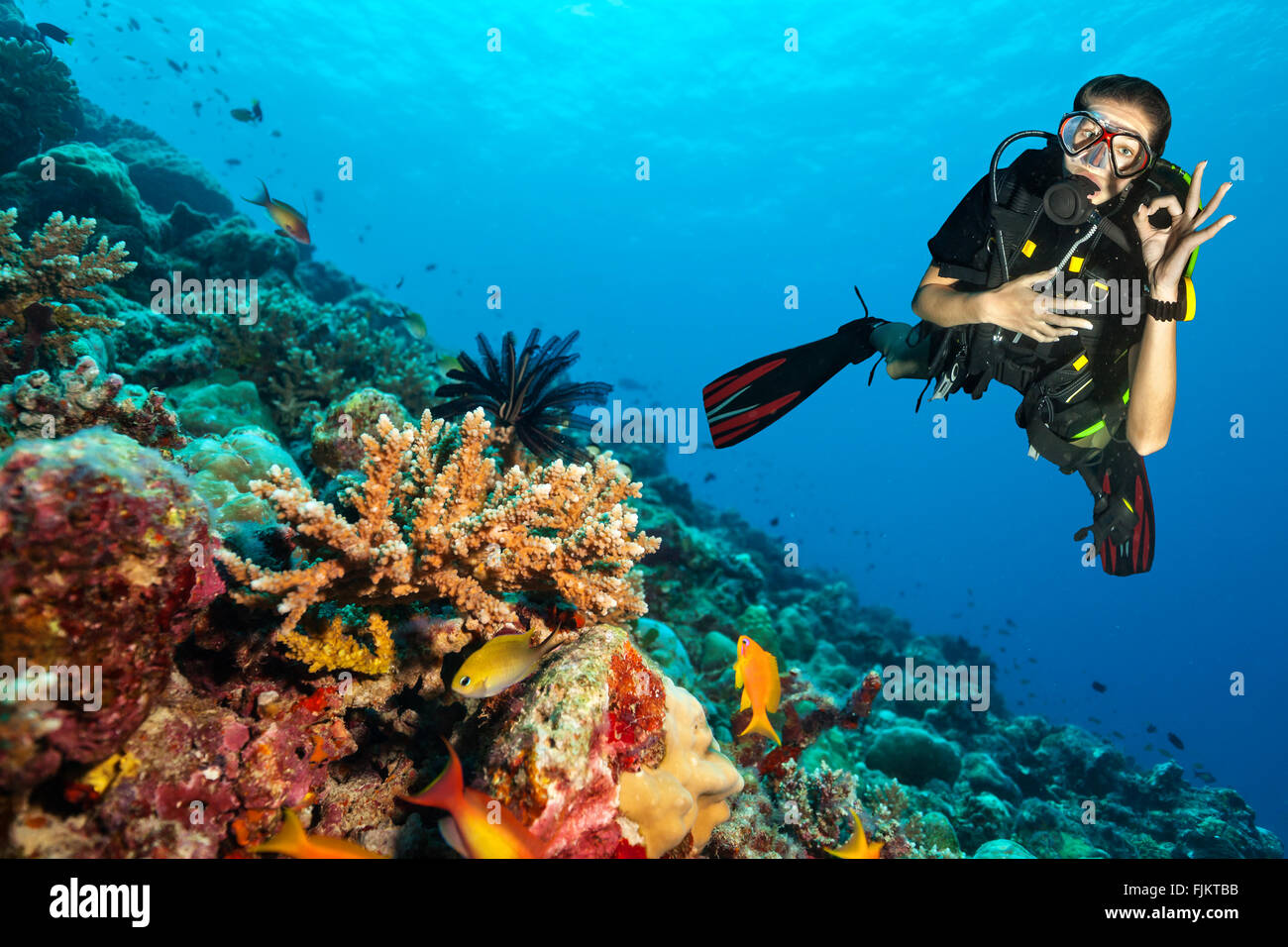 Scuba diver explore a coral reef showing ok sign - Stock Image