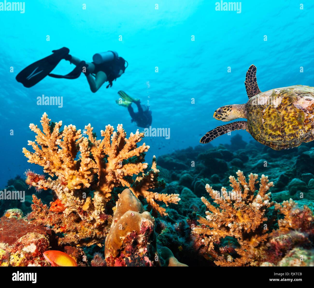 Scuba divers explore a coral reef - Stock Image