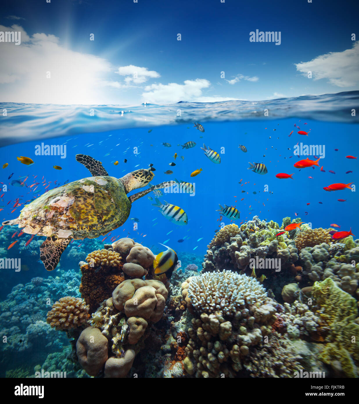 Underwater coral reef with horizon and water surface - Stock Image