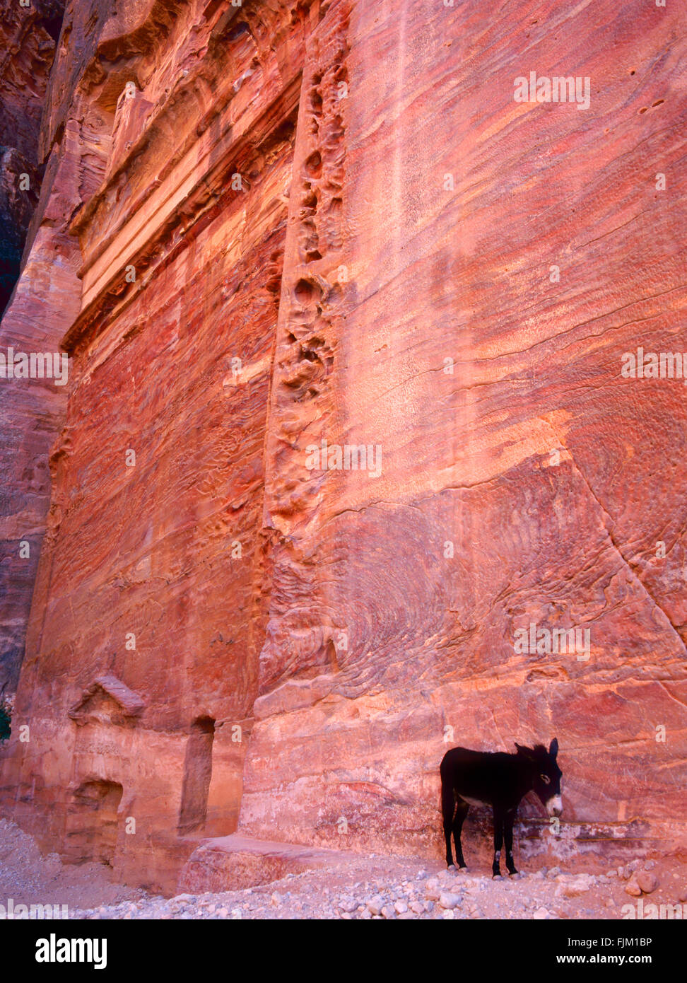 View of Petra with an donkey.This site is an Unesco World Heritage Site - Stock Image