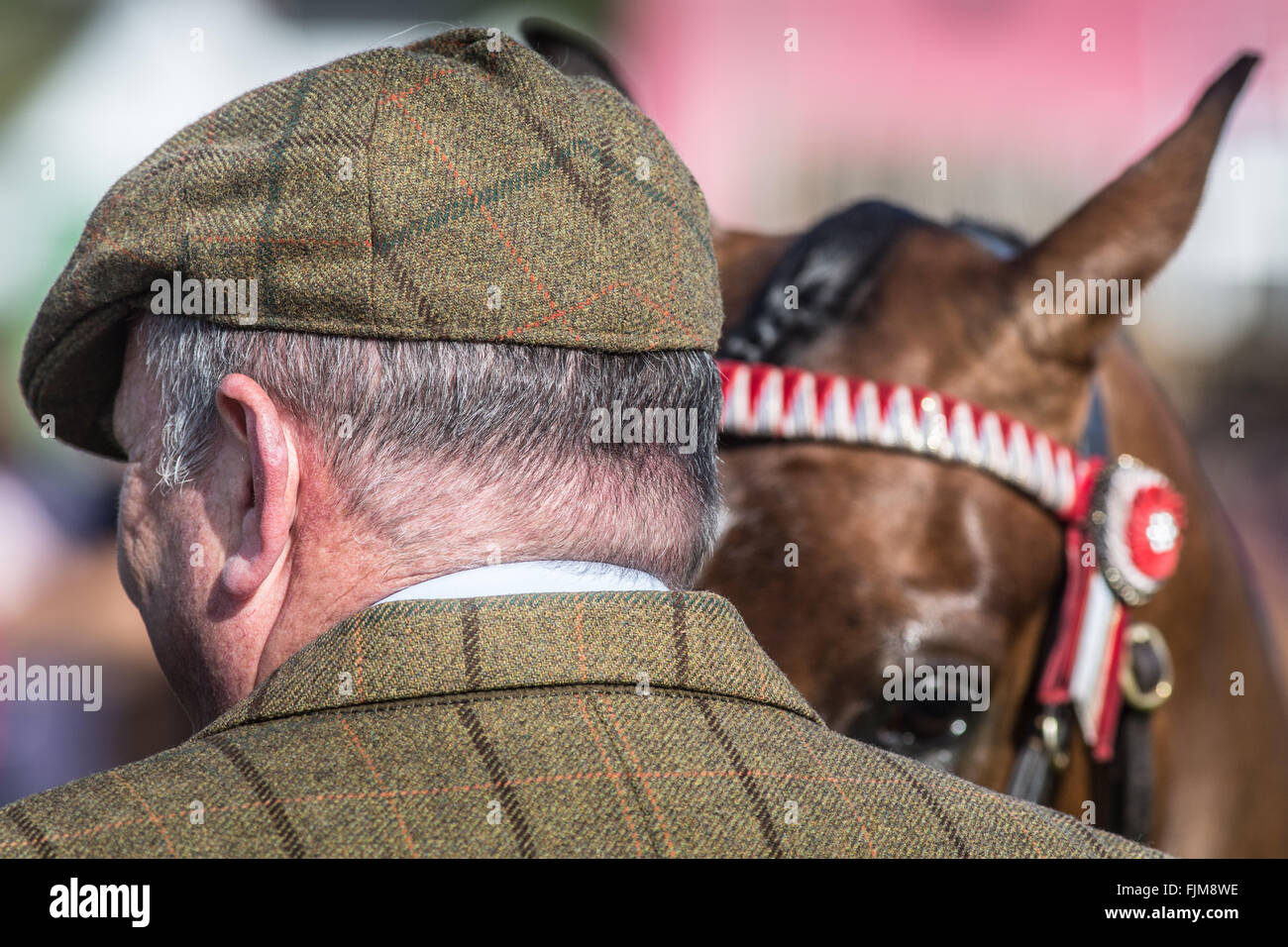 scenes from the Devon County show. - Stock Image