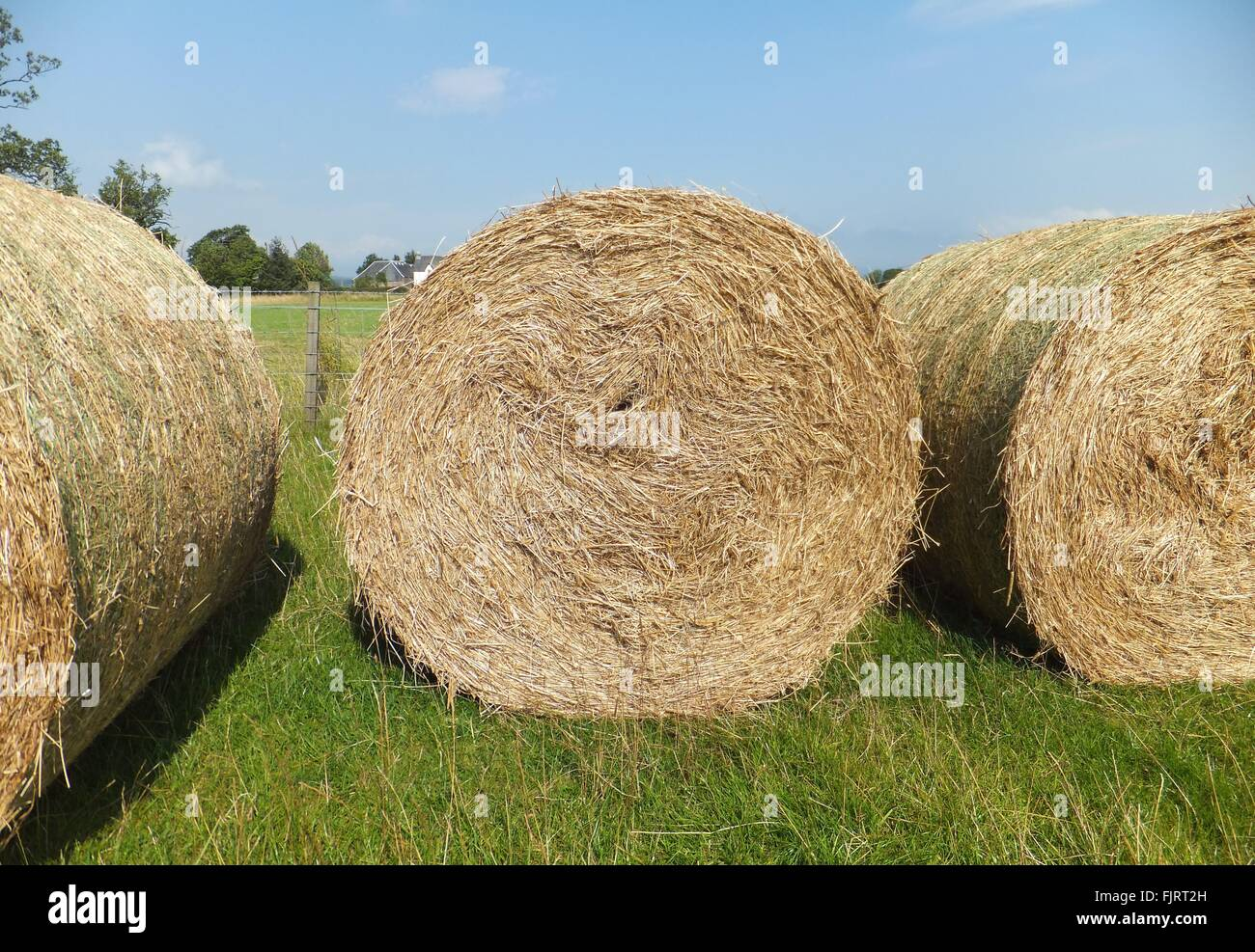 Hay Bales On Agricultural Field Against Sky Stock Photo