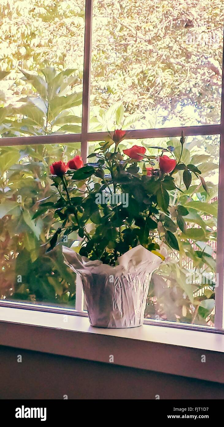 Flower Pot On Window Sill At Home   Stock Image
