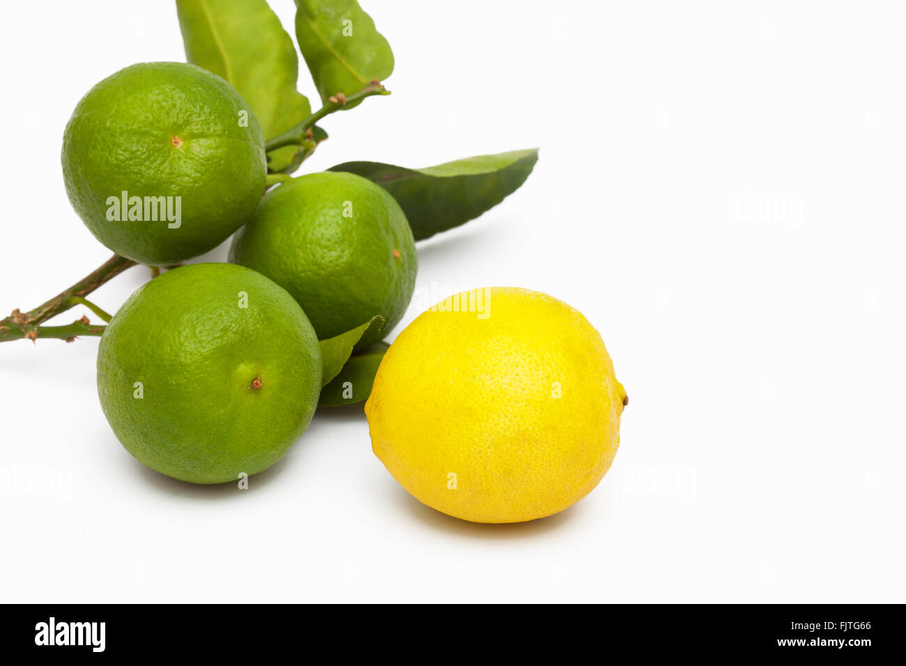 Freshly picked key limes from a Florida garden - Stock Image