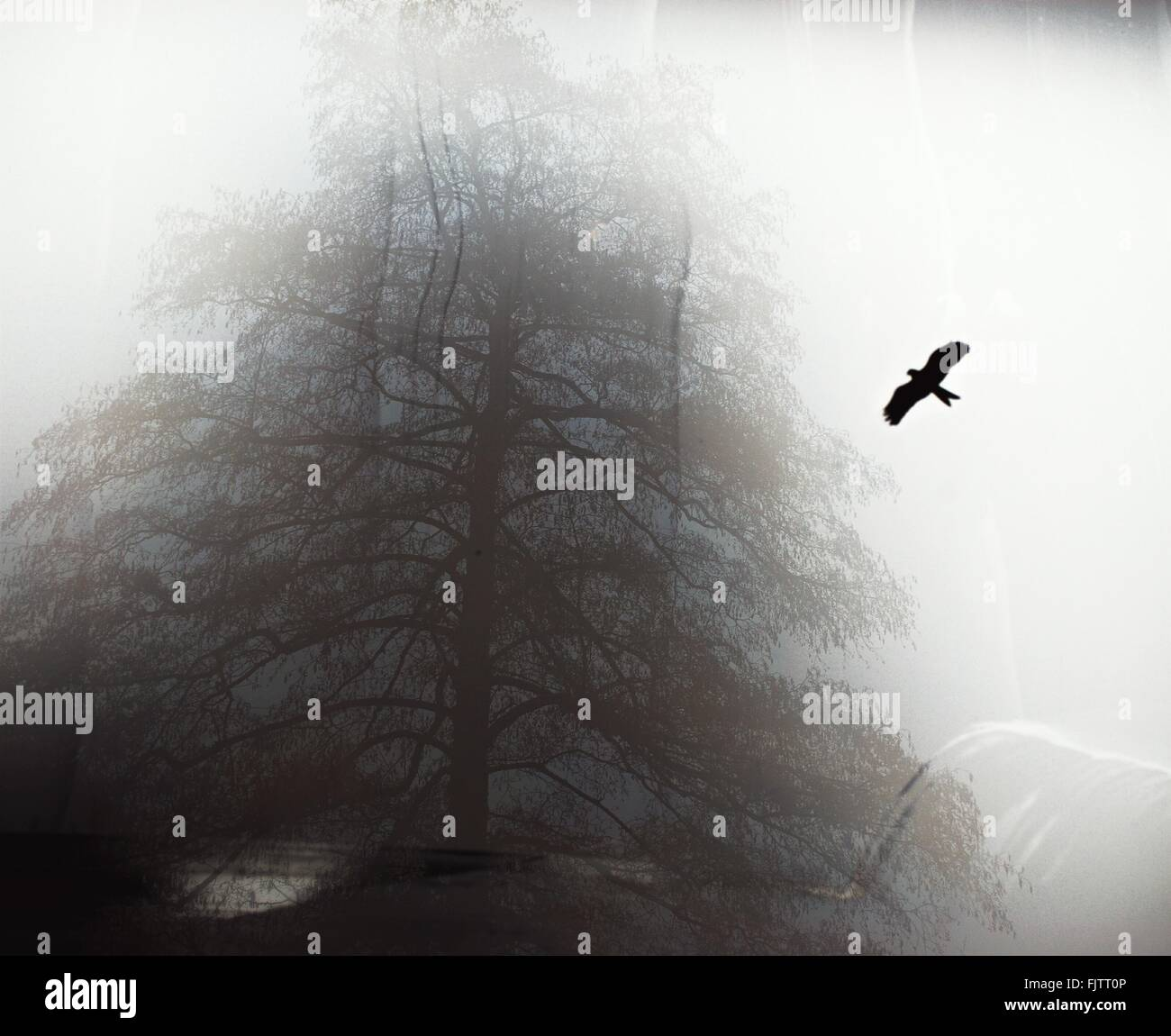 Digital Composite Image Of Silhouette Bird Flying In Sky And Trees - Stock Image