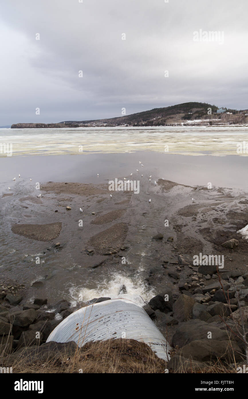 Sewage pipe draining into the St Lawrence River, Gaspe, Quebec. Scattered seagulls on the water and floating ice. - Stock Image