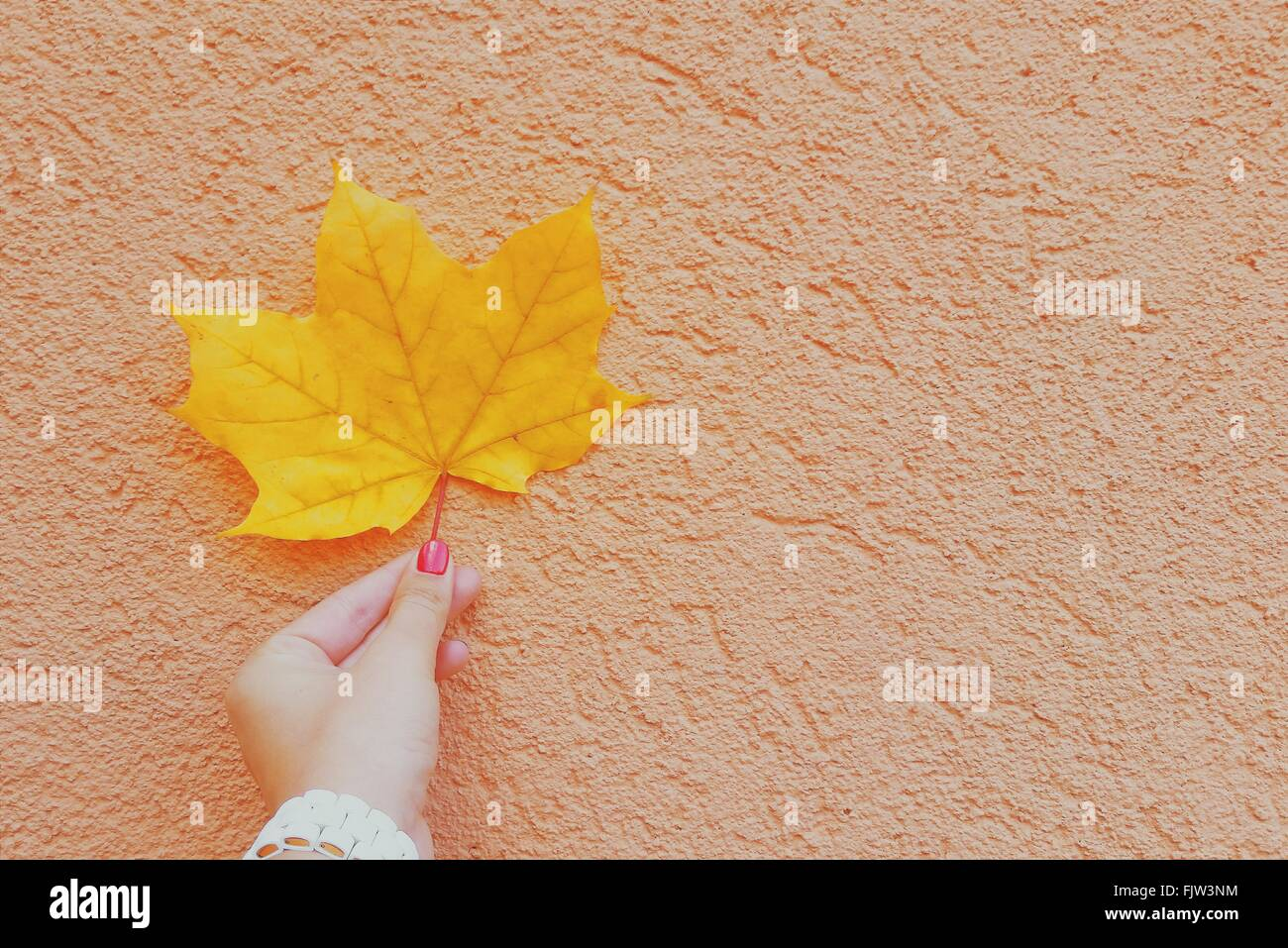 Cropped Image Of Woman Holding Dry Yellow Autumn Leaf Against Wall - Stock Image
