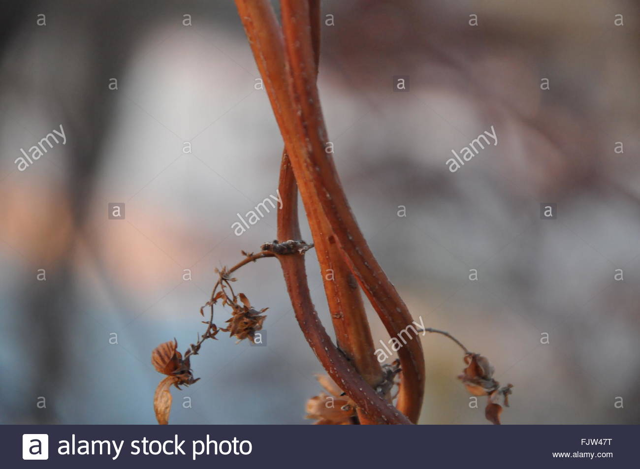 Close-Up Of Stems - Stock Image