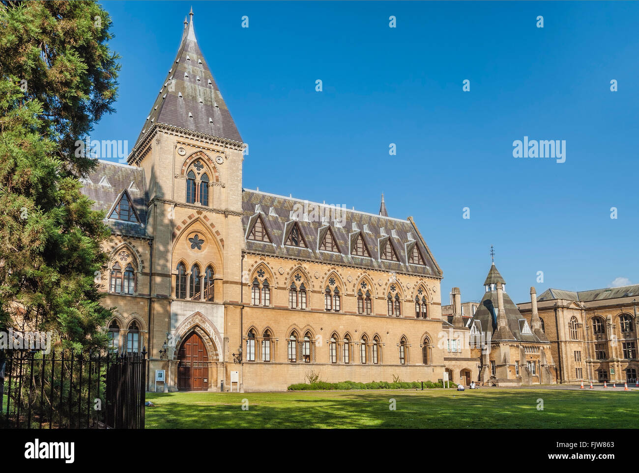 Oxford University Museum of Natural History, Oxfordshire, England - Stock Image