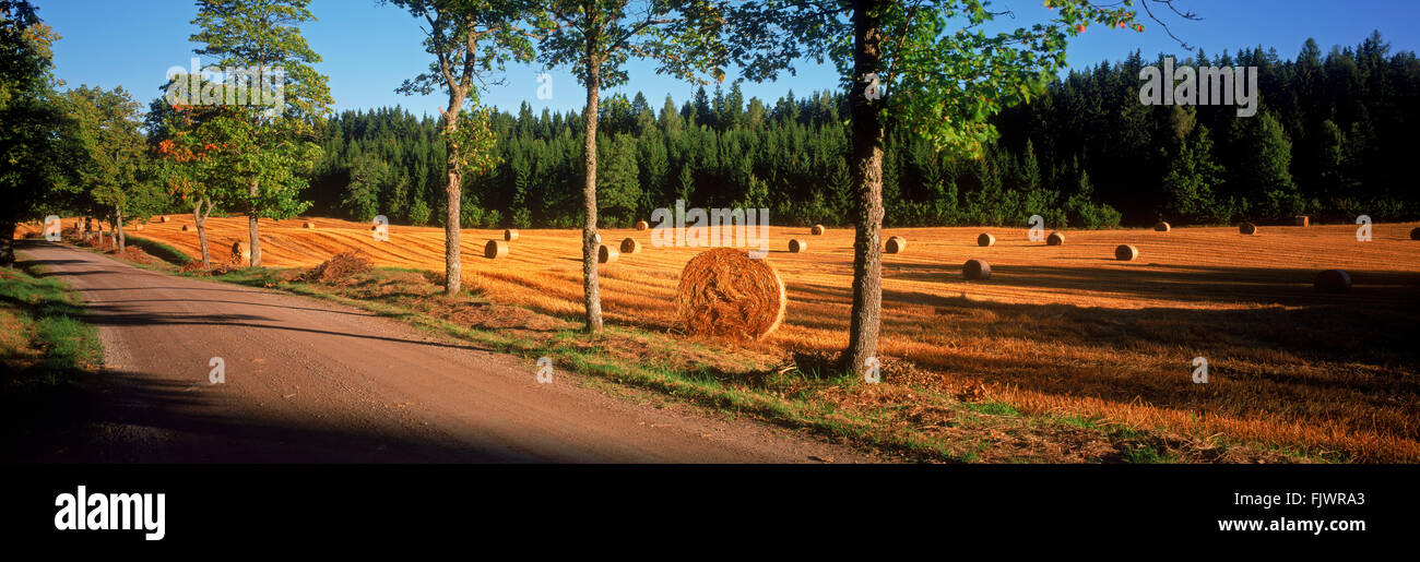 Panoramic image of sunrise light across field of cut and rolled hay near town of Flens in Sweden - Stock Image