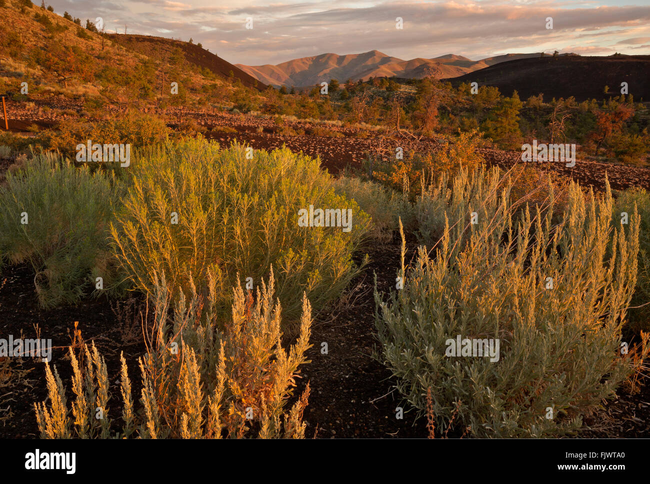 IDAHO - Sunrise colors on the pumice field below the Inferno Cone in Craters of the Moon National Monument and Preserve. - Stock Image