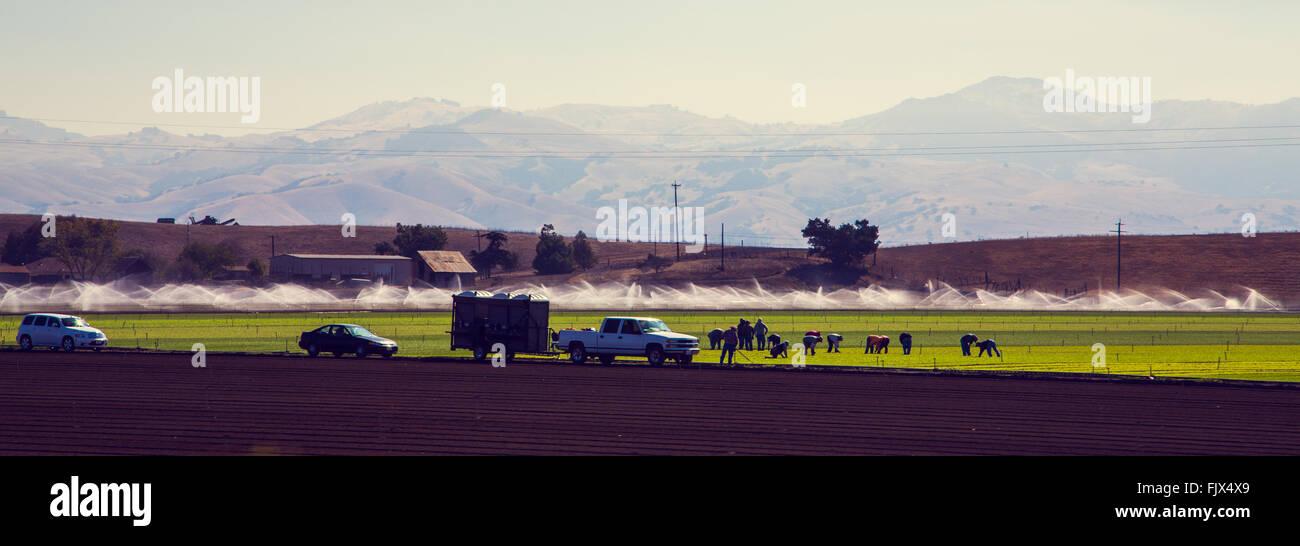 California Farming - Stock Image