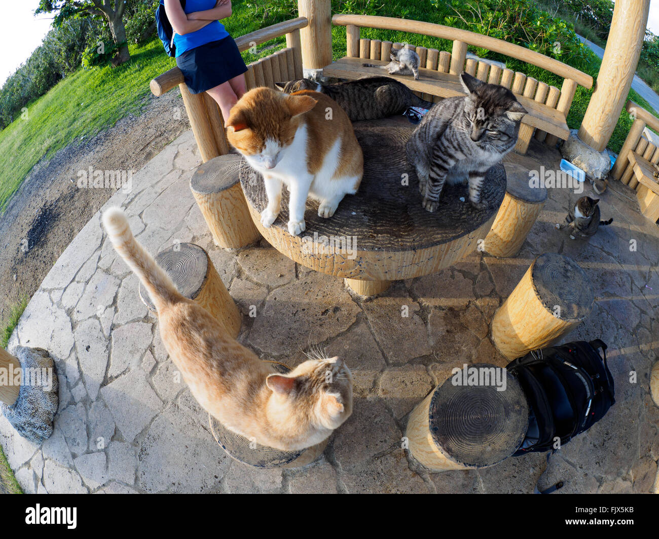 High Angle View Of Cats And Person At Gazebo - Stock Image