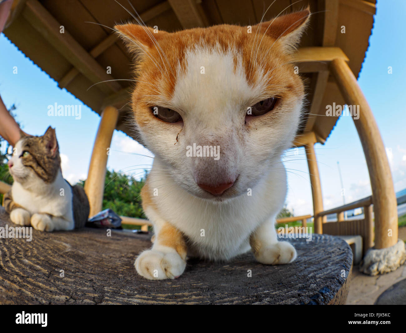 Close-Up Portrait Of Cat Sitting On Wooden Seat Outdoors - Stock Image
