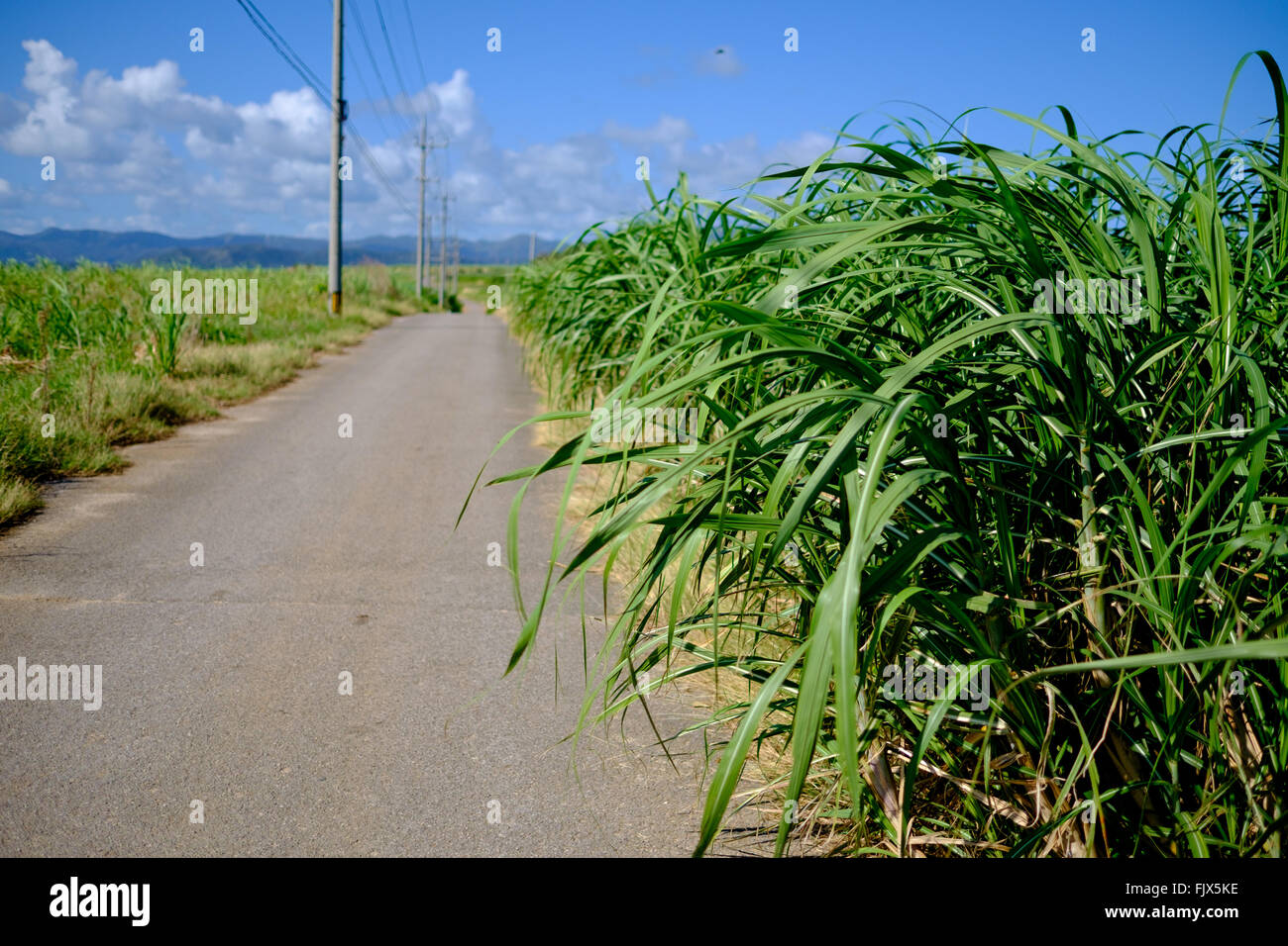 Road Amidst Field Against Sky - Stock Image