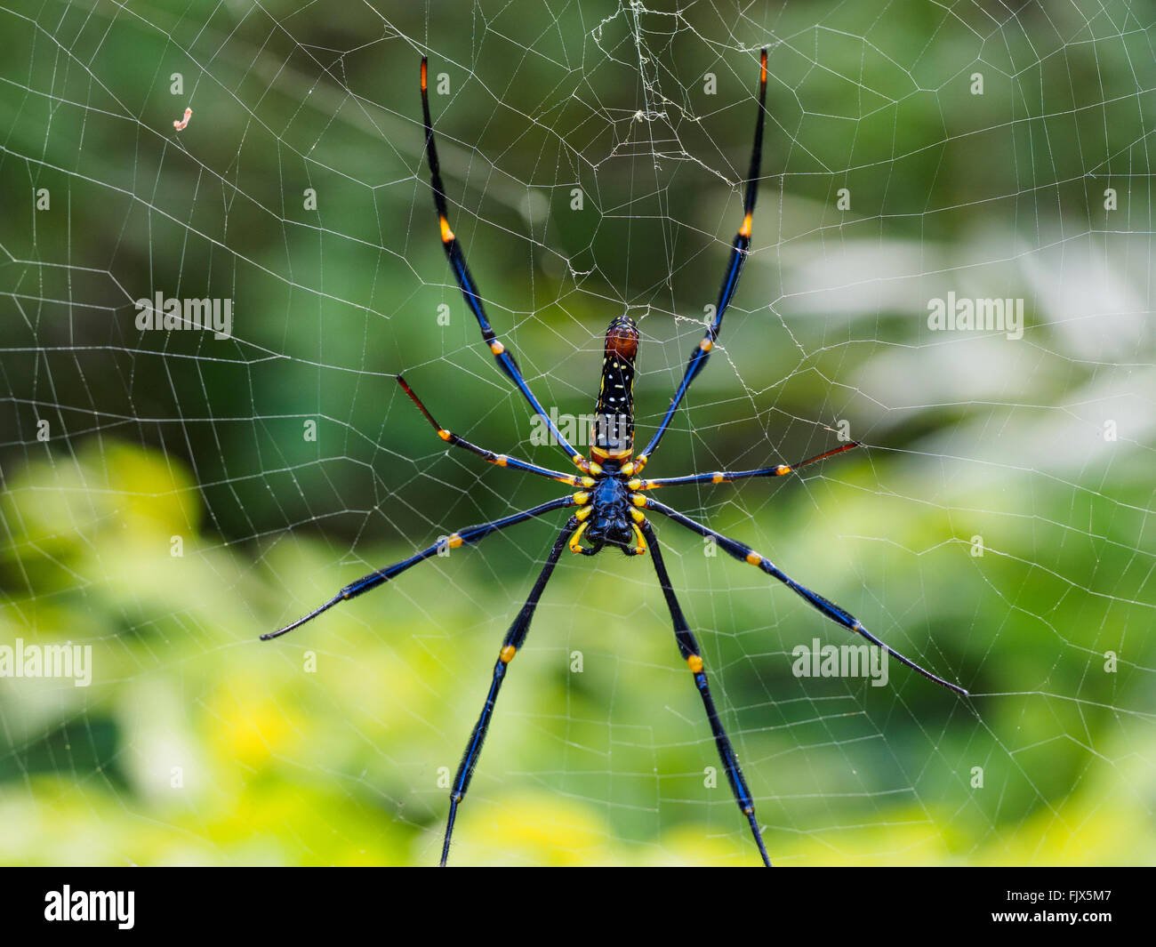 Close-Up Of Spider On Web - Stock Image
