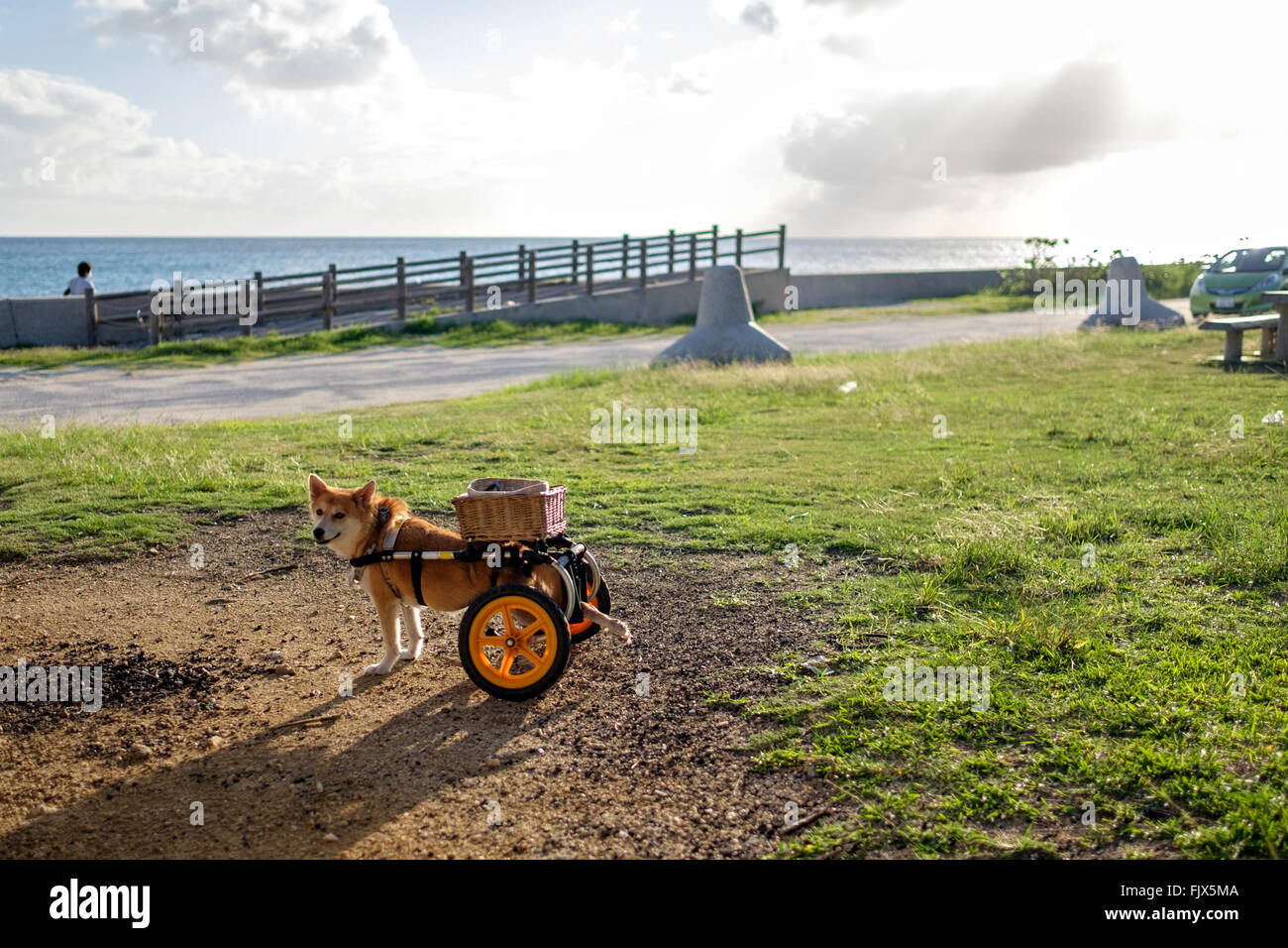Trailer Tied To Dog On Field - Stock Image