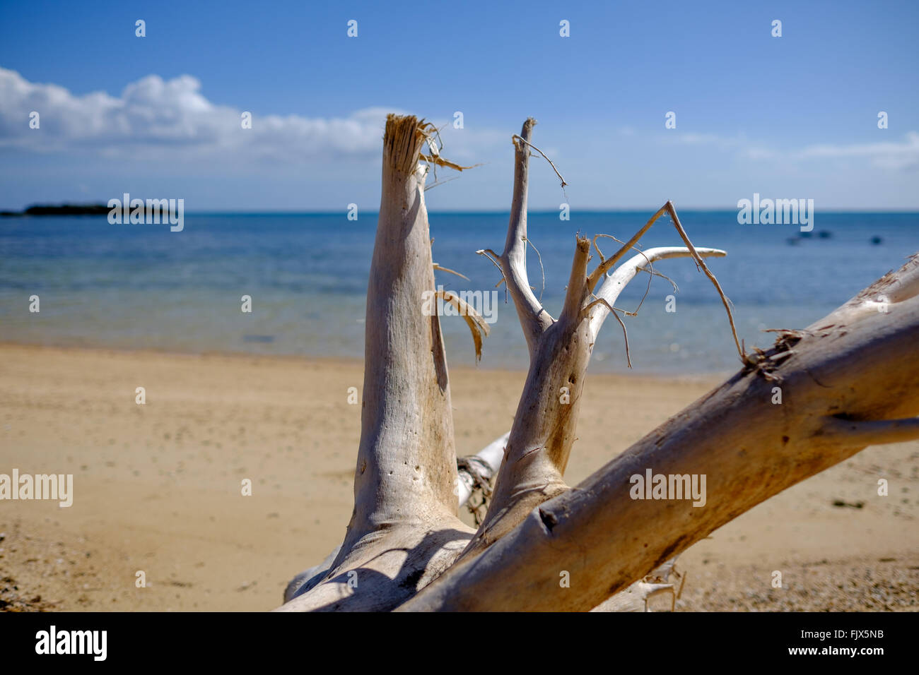 Driftwood On Beach By Sea Against Sky - Stock Image