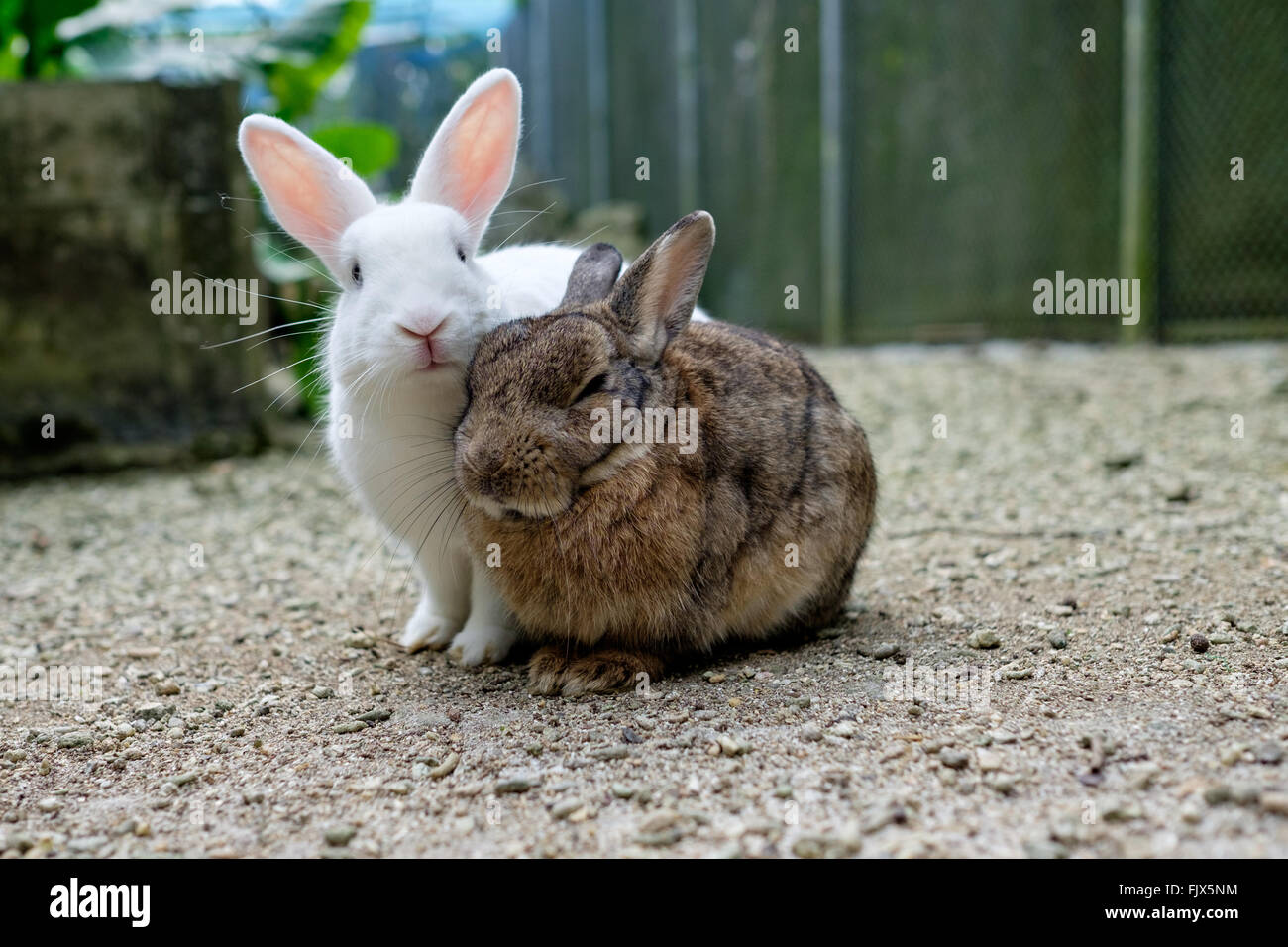 Portrait Of Rabbits On Field - Stock Image