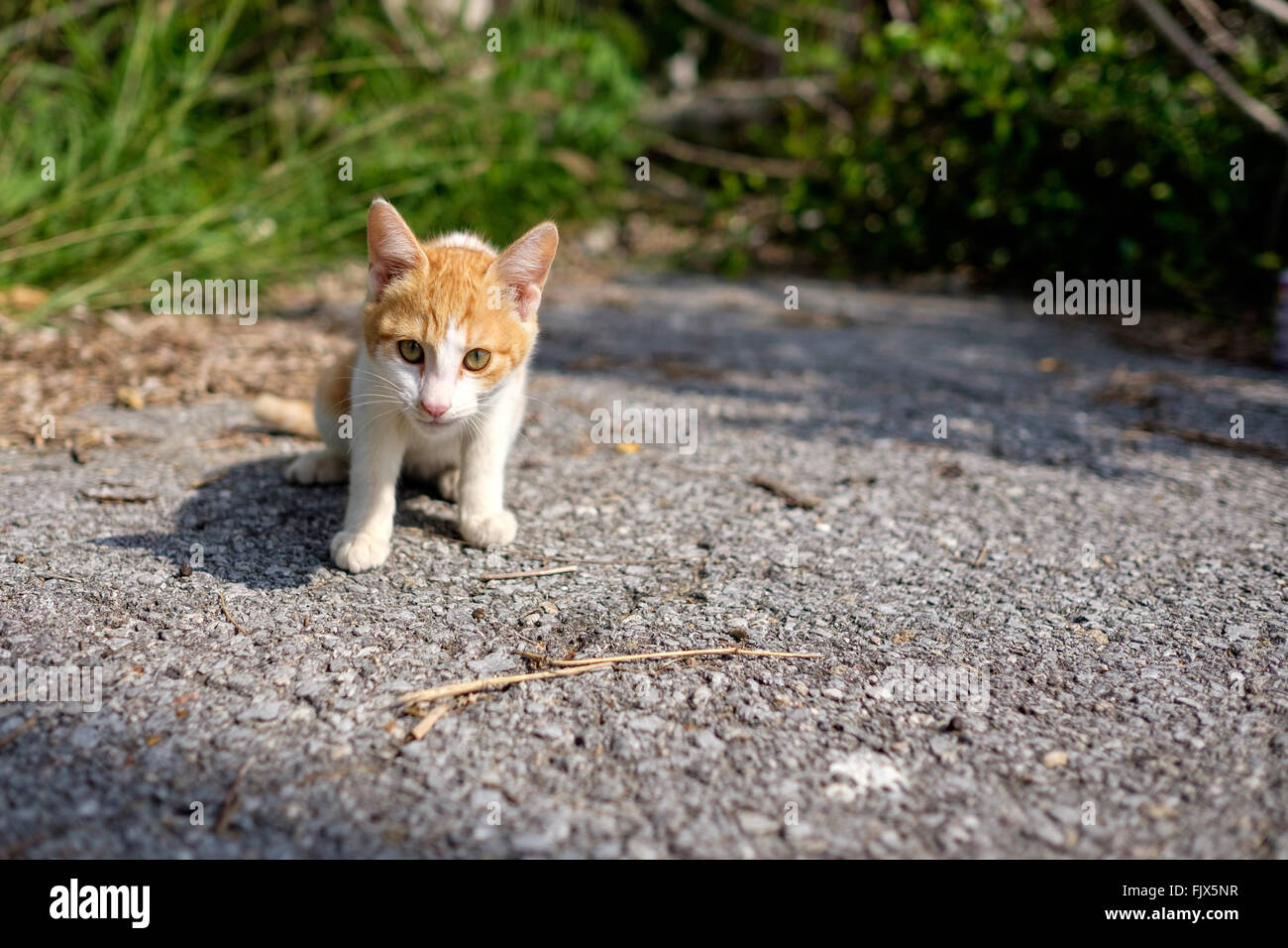 Portrait Of Cat Sitting On Field - Stock Image