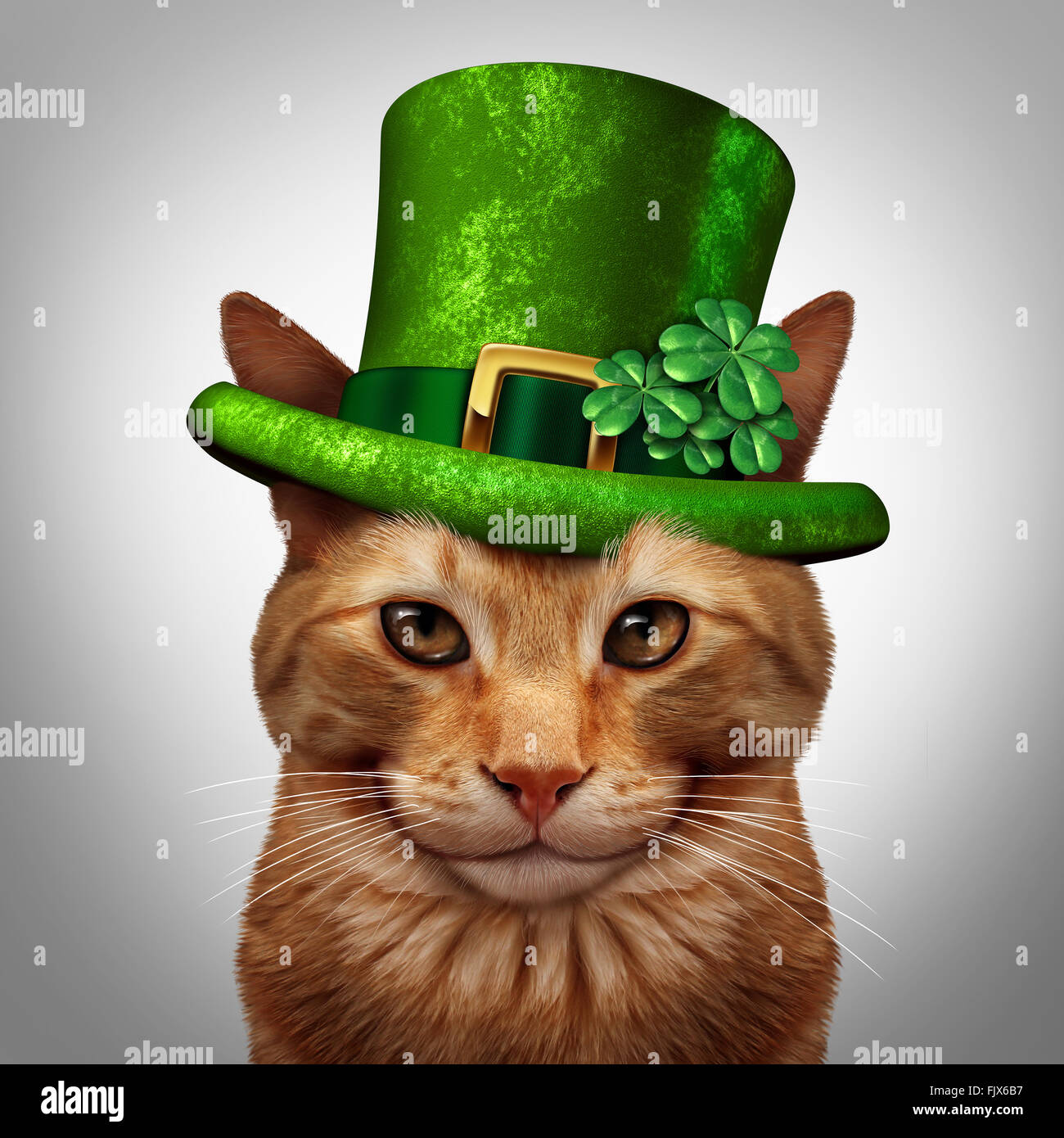 Saint Patricks day cat concept as a fun happy smiling feline pet wearing a leprechuan green hat with shamrock four - Stock Image