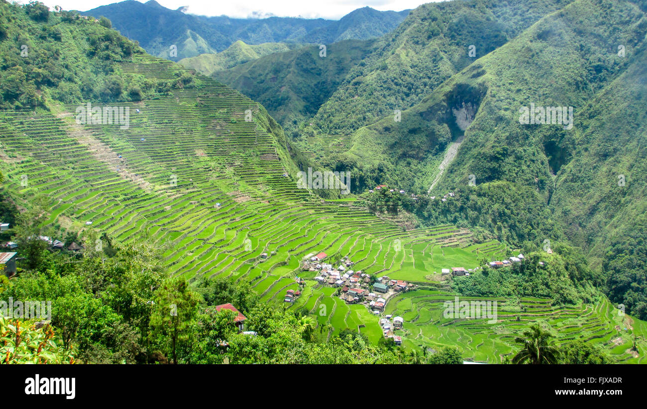 High Angle View Of Rice Terraces On Mountain Stock Photo
