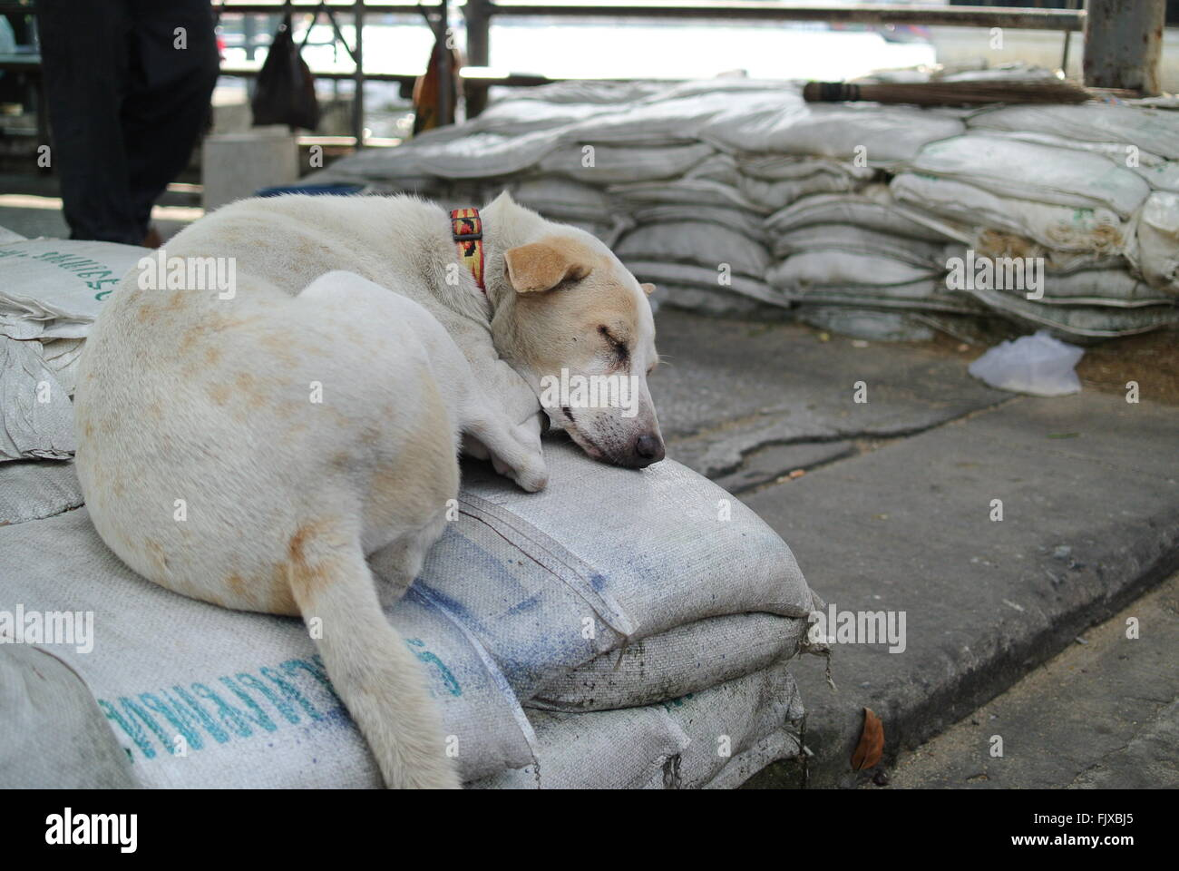 Dog Sleeping On Stacked Sacks - Stock Image