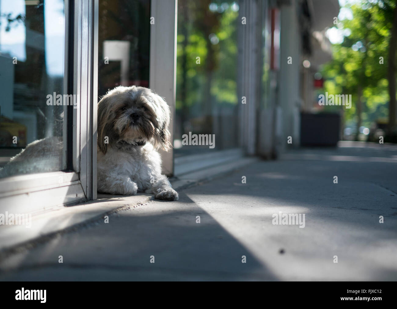 Dog Door Glass Stock Photos Dog Door Glass Stock Images Alamy