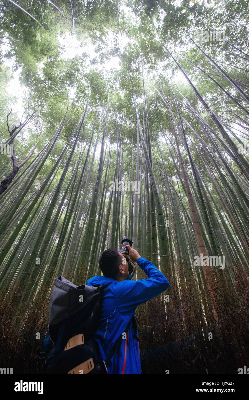 Low Angle View Of Man Photographing In Bamboo Groove - Stock Image