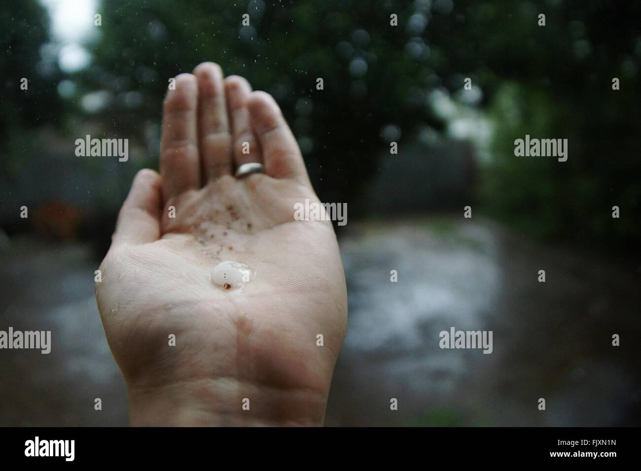 Cropped Hand Holding Water During Rainy Season - Stock Image
