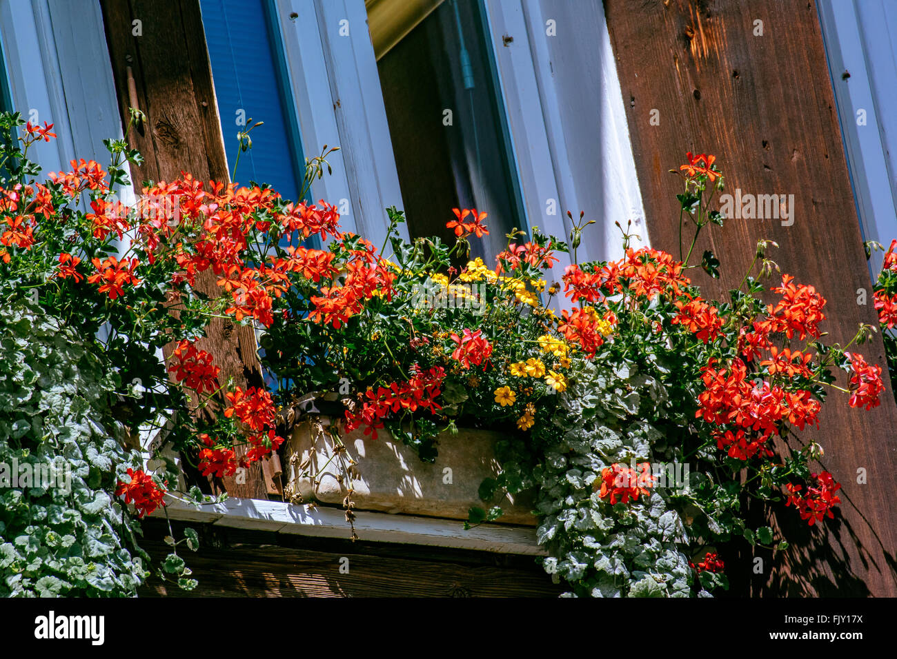 Low Angle View Of Flowers Growing On Window Box - Stock Image