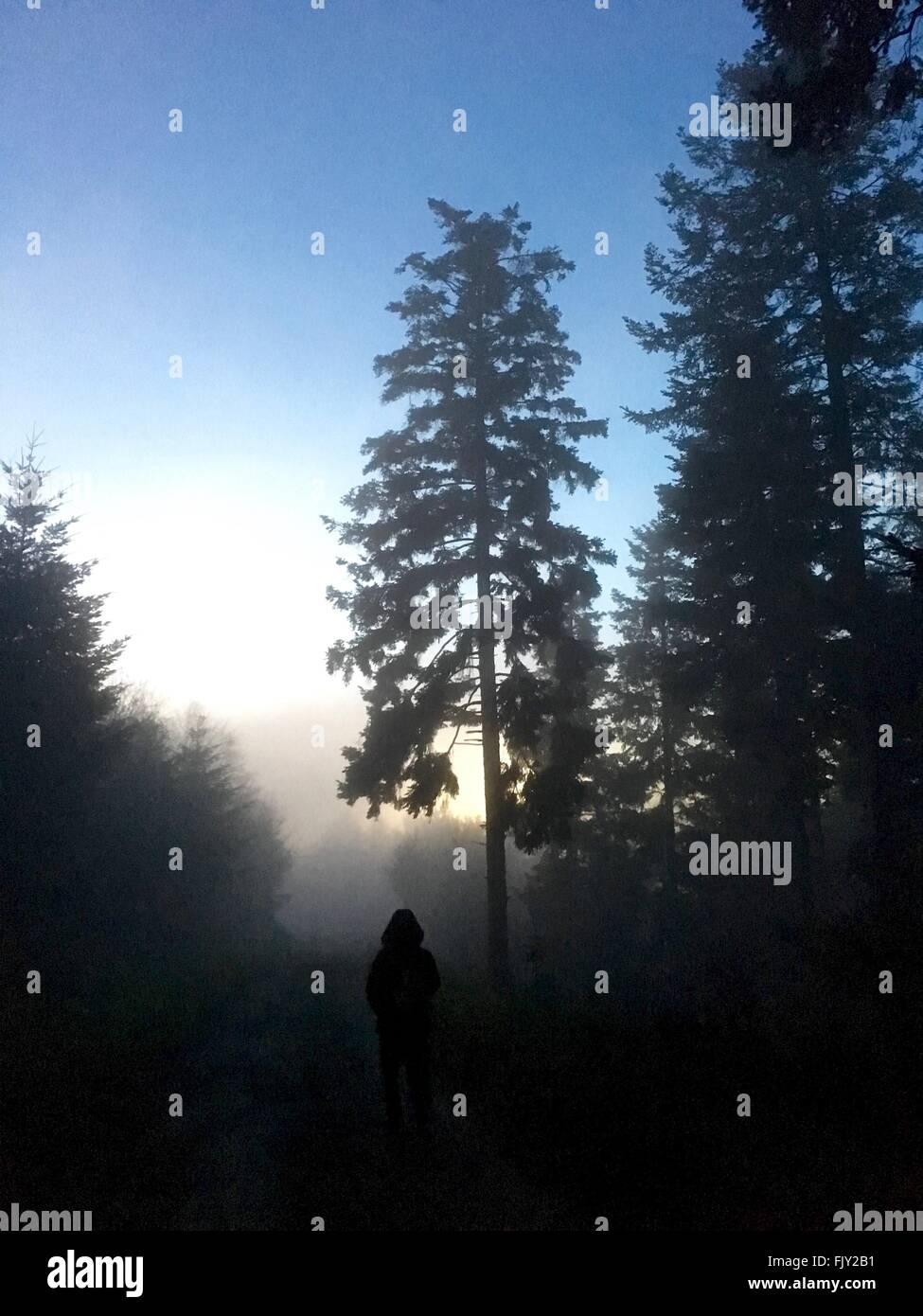 Silhouette Person Standing In Forest During Foggy Weather - Stock Image
