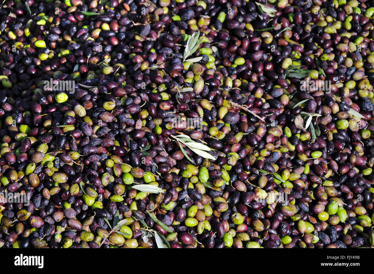Pile of olives - Stock Image