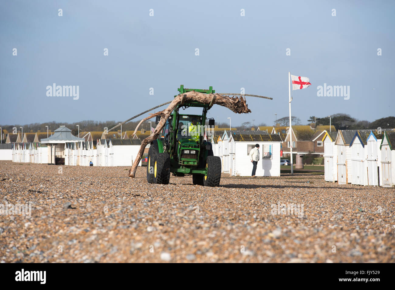 tractor removing old water washed  tree jetsam that has been washed up on a beach during a storm in Goring west - Stock Image