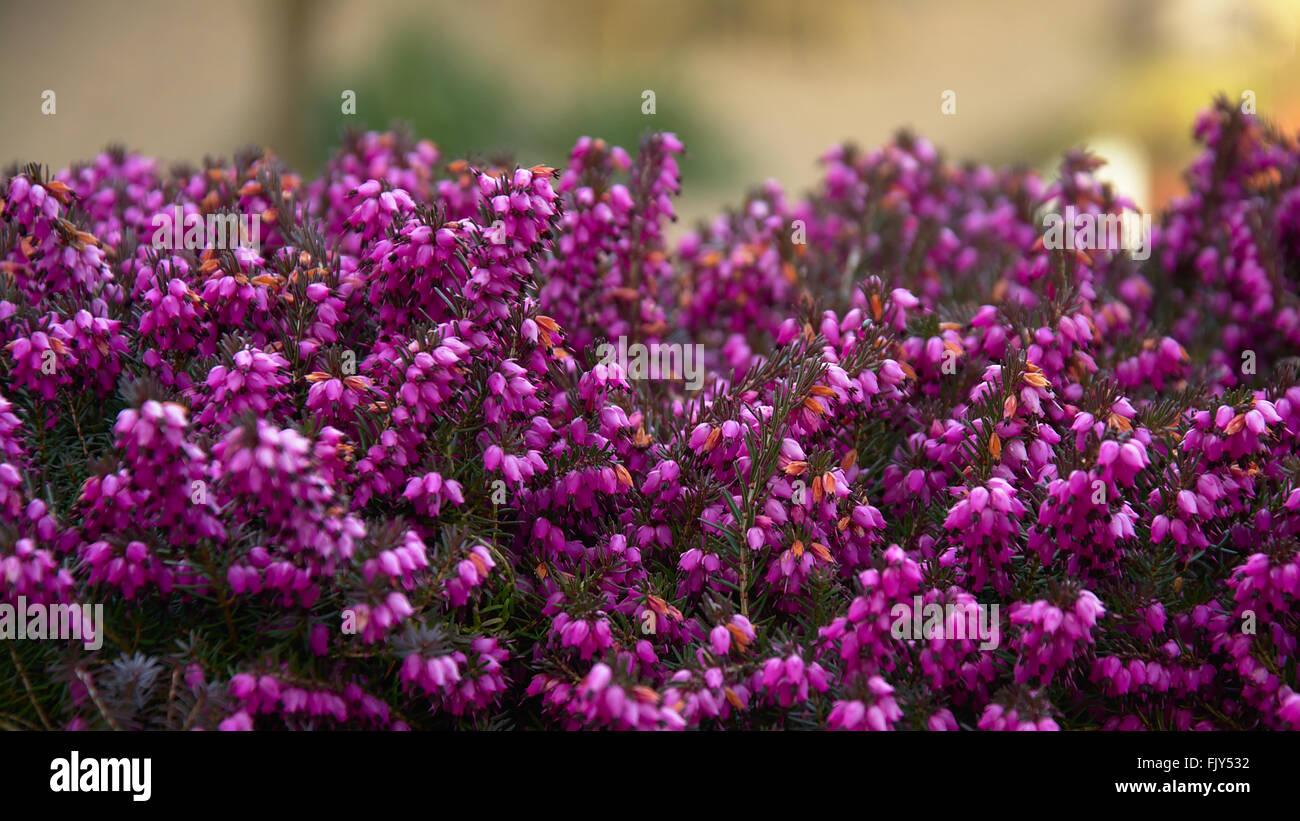 Background with lots of little purple flowers stock photo 97712358 background with lots of little purple flowers mightylinksfo