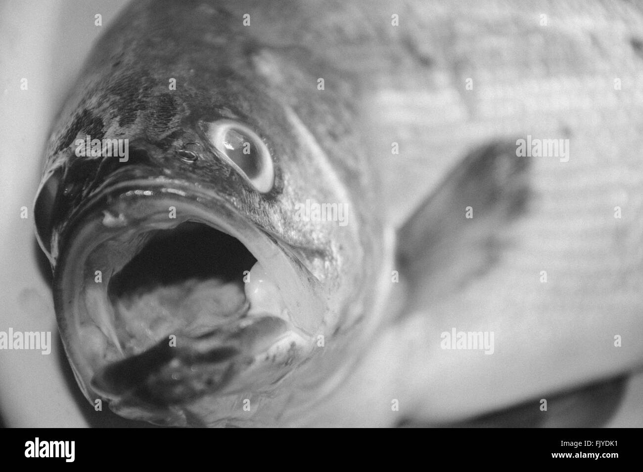 Close-Up Of Dead Fish - Stock Image