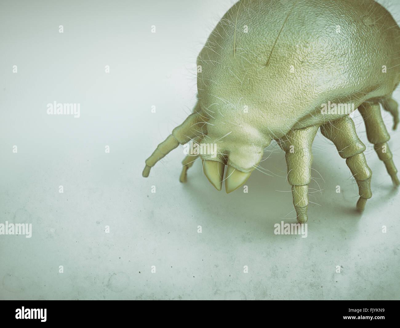 House dust mite Stock Photo