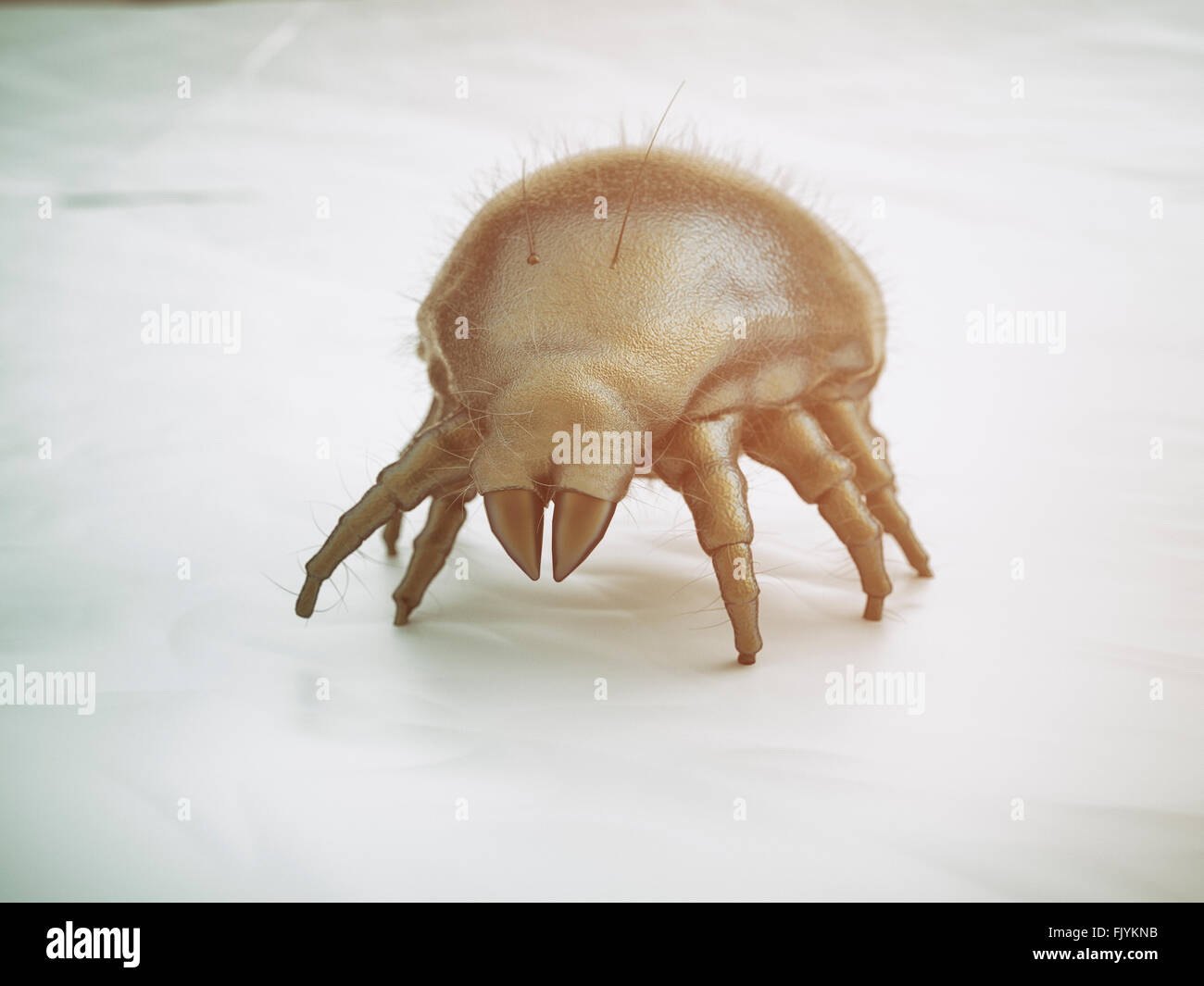 House dust mite Stock Photo